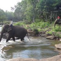 """die Elefanten kommen • <a style=""""font-size:0.8em;"""" href=""""http://www.flickr.com/photos/127204351@N02/18696964392/"""" target=""""_blank"""">View on Flickr</a>"""
