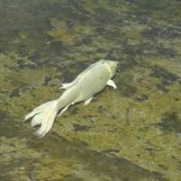 """sogar die Fische haben sie weiß gemalt ;) • <a style=""""font-size:0.8em;"""" href=""""http://www.flickr.com/photos/127204351@N02/19314763282/"""" target=""""_blank"""">View on Flickr</a>"""