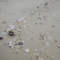 """in unserem Schnorchelgebiet muss es Korallen geben...neben Styropor liegen sie am Strand • <a style=""""font-size:0.8em;"""" href=""""http://www.flickr.com/photos/127204351@N02/18710957386/"""" target=""""_blank"""">View on Flickr</a>"""