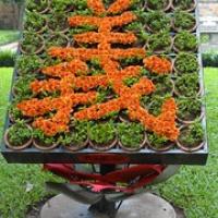 """Schriftzeichen aus Blumen • <a style=""""font-size:0.8em;"""" href=""""http://www.flickr.com/photos/127204351@N02/18852623045/"""" target=""""_blank"""">View on Flickr</a>"""