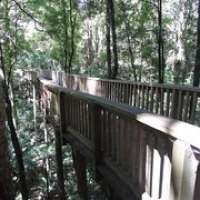 """Treetopwalk • <a style=""""font-size:0.8em;"""" href=""""http://www.flickr.com/photos/127204351@N02/16387430325/"""" target=""""_blank"""">View on Flickr</a>"""