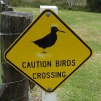 """viele größere Vögel laufen nur noch, weil sie ja keine Feinde haben • <a style=""""font-size:0.8em;"""" href=""""http://www.flickr.com/photos/127204351@N02/16385690161/"""" target=""""_blank"""">View on Flickr</a>"""