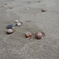 """nicht auf der Dünde, sondern am Strand • <a style=""""font-size:0.8em;"""" href=""""http://www.flickr.com/photos/127204351@N02/16200080750/"""" target=""""_blank"""">View on Flickr</a>"""