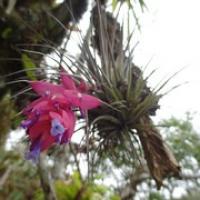 """so eine Pflanze, die man bei uns kaufen kann und nur besprühen muss • <a style=""""font-size:0.8em;"""" href=""""http://www.flickr.com/photos/127204351@N02/15717543257/"""" target=""""_blank"""">View on Flickr</a>"""