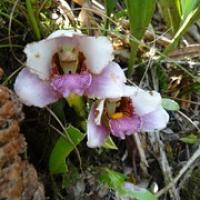 """zwei von drei Orchideen, die wir gesehen haben • <a style=""""font-size:0.8em;"""" href=""""http://www.flickr.com/photos/127204351@N02/15901332571/"""" target=""""_blank"""">View on Flickr</a>"""
