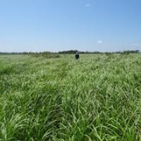 """typisch für Las Pampas...Gras • <a style=""""font-size:0.8em;"""" href=""""http://www.flickr.com/photos/127204351@N02/15690009056/"""" target=""""_blank"""">View on Flickr</a>"""