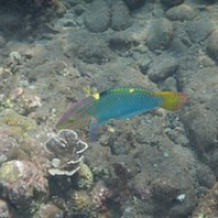 "pastellfarbenen Fisch • <a style=""font-size:0.8em;"" href=""http://www.flickr.com/photos/127204351@N02/17635785371/"" target=""_blank"">View on Flickr</a>"