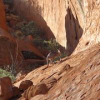 """wir sehen seit langem mal wieder ein Känguru • <a style=""""font-size:0.8em;"""" href=""""http://www.flickr.com/photos/127204351@N02/16734736113/"""" target=""""_blank"""">View on Flickr</a>"""