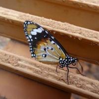 "Schmetterling auf einem der Stege • <a style=""font-size:0.8em;"" href=""http://www.flickr.com/photos/127204351@N02/16732454344/"" target=""_blank"">View on Flickr</a>"