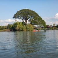 """toller großer Baum...sind aber eigentlich zwei ;) • <a style=""""font-size:0.8em;"""" href=""""http://www.flickr.com/photos/127204351@N02/17625850904/"""" target=""""_blank"""">View on Flickr</a>"""