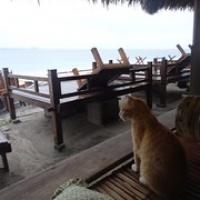 """auch die Katze möchte bei dem Wetter nicht raus • <a style=""""font-size:0.8em;"""" href=""""http://www.flickr.com/photos/127204351@N02/17167935280/"""" target=""""_blank"""">View on Flickr</a>"""