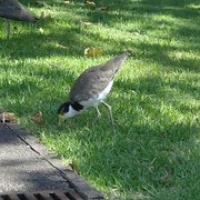 """Vogel im Botanischen Garten • <a style=""""font-size:0.8em;"""" href=""""http://www.flickr.com/photos/127204351@N02/15858650704/"""" target=""""_blank"""">View on Flickr</a>"""