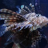 "exotischer Fisch • <a style=""font-size:0.8em;"" href=""http://www.flickr.com/photos/127204351@N02/16479504861/"" target=""_blank"">View on Flickr</a>"