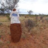 """einige der Termiten haben Thsirts an • <a style=""""font-size:0.8em;"""" href=""""http://www.flickr.com/photos/127204351@N02/17167438638/"""" target=""""_blank"""">View on Flickr</a>"""