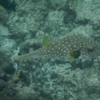 """Boxfish • <a style=""""font-size:0.8em;"""" href=""""http://www.flickr.com/photos/127204351@N02/16738318684/"""" target=""""_blank"""">View on Flickr</a>"""